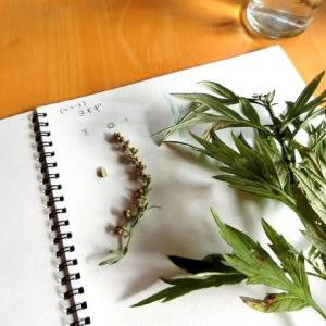 植物の真の姿を知る