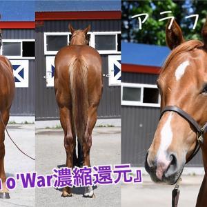 ノルマンディー二次募集と2歳馬