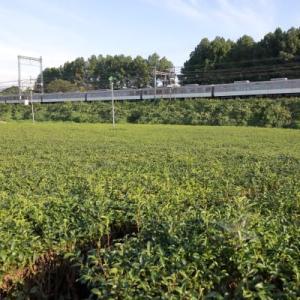 茶畑とシリーズ21