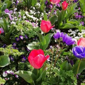 春だね!花がきれいだね!