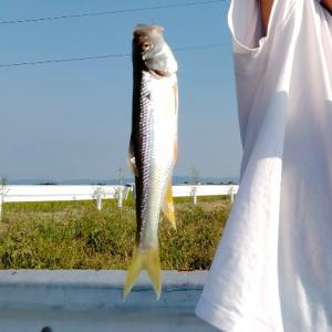 釣りを楽しむがまだまだ酷暑・・/ハンドメイド(刺繍)