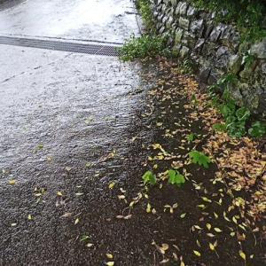 梅雨明け宣言か?