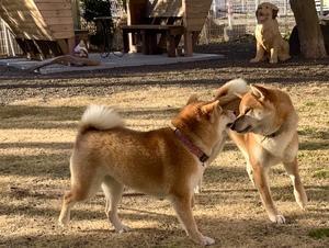 犬の鼻500メートル・・