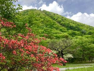 新緑の榛名富士とヤマツツジ!