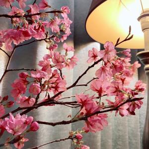 会員様限定『HARU・桜』コースのお知らせ(4月15日まで)【訂正】
