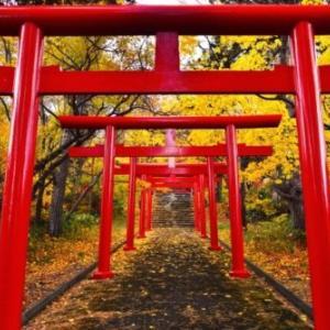 神社本庁とは何か|最低限知っておきたい知識をわかりやすく解説