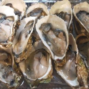 食ING情報☆生牡蠣を堪能いたしましたー!!!!@OysterBar(シェムリアップ)