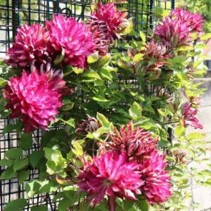 モリモリの花たち
