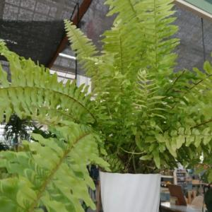 おすすめの観葉植物
