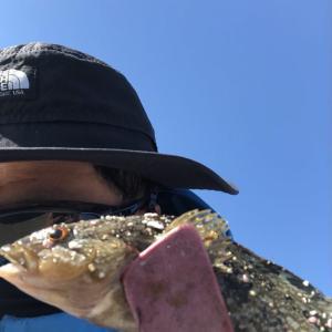 須磨で6種釣りできたけど本命のキスは…