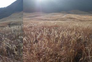 ススキ の草原