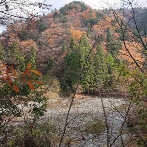 京都秘境・芦生(あしう)の森 原生林(1) 芦生熊野権現神社にお参りしてから入林