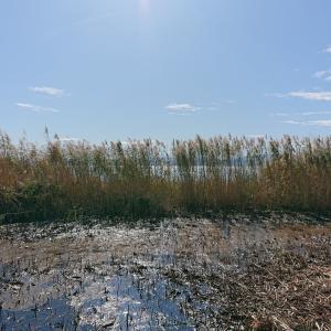 古代の地下資源 ベンガラの原料・褐鉄鉱(リモナイト)ワンニャン・ペットフードの話