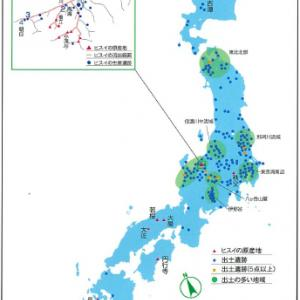 国石 ヒスイの古代史(翡翠)(4)縄文中期 工房・匠の技から生まれる大珠(たいしゅ)北・東日本に流通