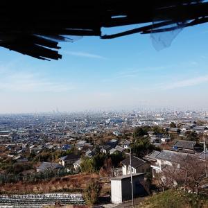 生駒山腹 大阪平野を一望する玉祖神社(たまのおやじんじゃ) 長鳴鶏(天然記念物)と見ごろのスイセン