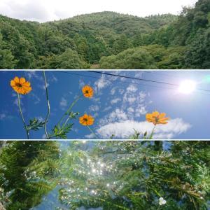 夏の終わりの大神神社【御神山 三輪山】親バカを 地で行く残暑 山の辺の道