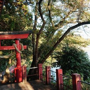 【滝の前 多伎神社】三面川の河口 海沿いの長い参道 滝とタブノキ林【サケの記憶】