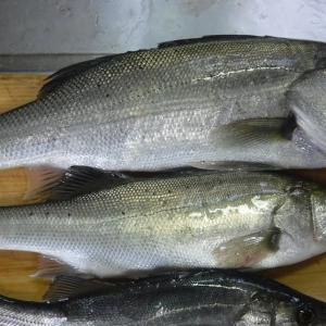 2週連続の大漁なので、我が家の晩御飯!!!