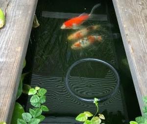池に自作濾過槽を追加