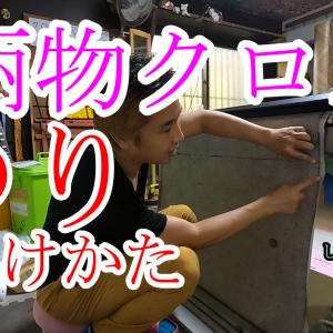 【沖縄壁紙クロス】柄物クロスの糊のつけかた動画