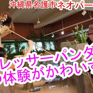 【レッサーパンダ Red Panda】キュン死しそうだった♡レッサーパンダおやつ体験♪【ネオパークオキナワ】