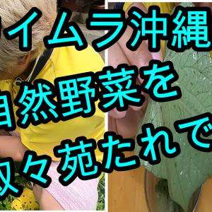 【セカイムラ】叙々苑野菜サラダのたれで自然野菜を食べる!