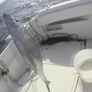 マイボートで内房保田沖のマダイ釣り~保田のモンスター現る