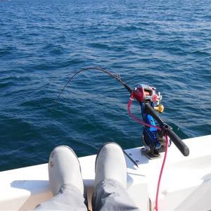 釣りのエッセイ~保田のモンスターを追い求めた一年を振り返る