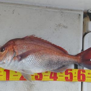 マイボートで内房保田沖のマダイ釣り~強行釣行成功。前回のリベンジなる。大鯛が浮上!!