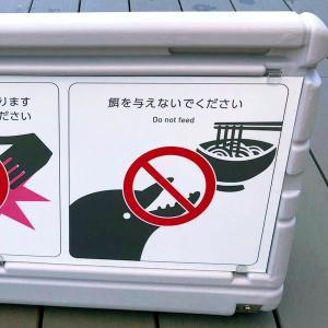 """さすがは""""うどん県""""の水族館だ"""