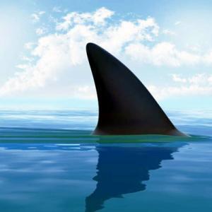 ホオジロザメの本当の恐ろしさ