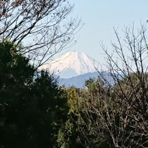 立川昭和記念公園より