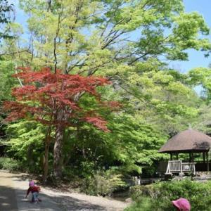 川崎市:東高根森林公園~等覚院つつじ寺(2021.4/9)