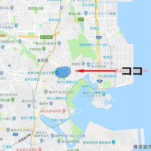 ● 横浜 称名寺~1 -2020年11月