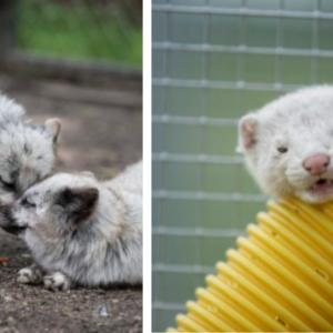 毛皮農場の恐怖を逃れた動物の写真12枚。5枚目ですでにメロメロ
