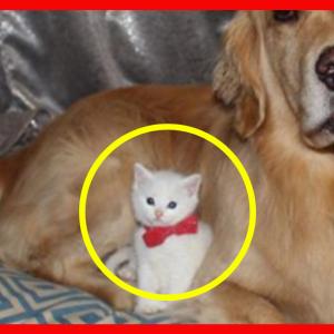 家に来た時その猫は400グラムだった。7か月後飼い主が目撃した姿は想像をはるかに超える