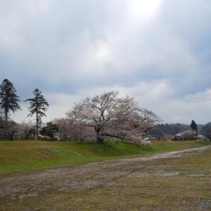 miraiのブログ(山陰 松江しんじこ温泉の旅 斐伊川堤防桜並木 4  )