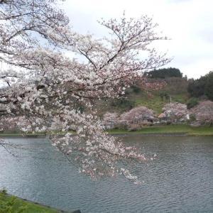 miraiのブログ(山陰 松江しんじこ温泉の旅 三刀屋のさくら並木 3 )