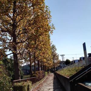 近所の散歩 紅葉を捜して(2020年10月31日)