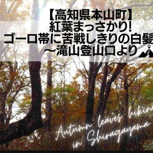 【高知県本山町】紅葉まっさかり!ゴーロ帯に苦戦しきりの白髪山へ〜滝山登山口より
