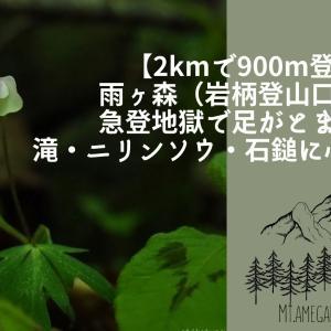 【2kmで900m登る・雨ヶ森(岩柄登山口)】急登地獄で足がとまる!滝・ニリンソウ・石鎚に心ときめく