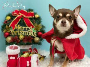 クリスマス