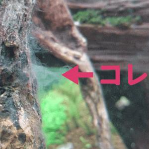 流木に付く白いモヤモヤ対策