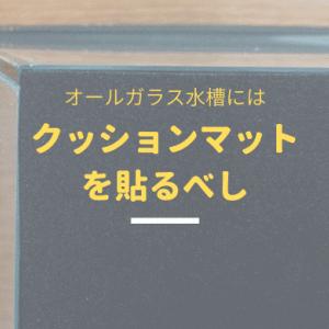 オールガラス水槽にはクッションマットを必ず敷こう ー水槽に貼り付けると便利ですー
