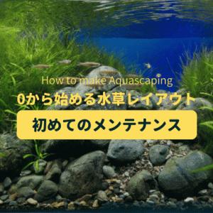 【水草レイアウト水槽】立ち上げ1週間の水草の成長と初めてのメンテナンス