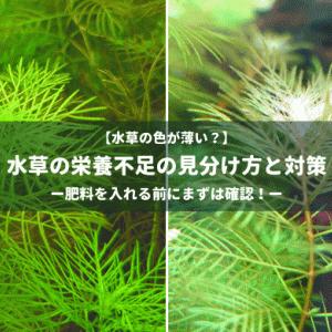 【水草の色が薄い?】水草の栄養不足の見分け方と対策 ー肥料を入れる前にまずは確認!ー