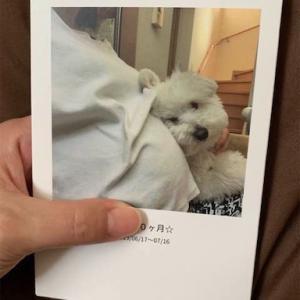 ☆生後107日目*アプリでアルバムづくり☆