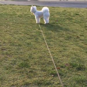 ☆犬の散歩をしていると☆