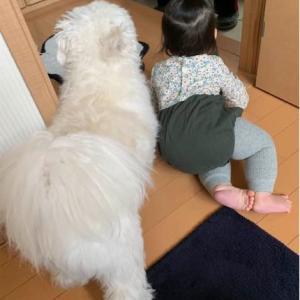 ☆兄妹みたいな犬と娘☆
