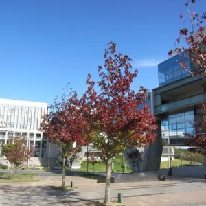 キャンパスの紅葉